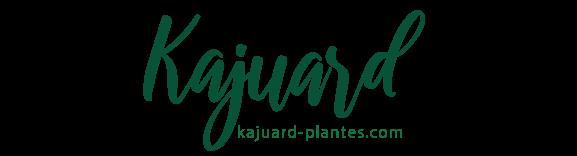 Kajuard Plantes